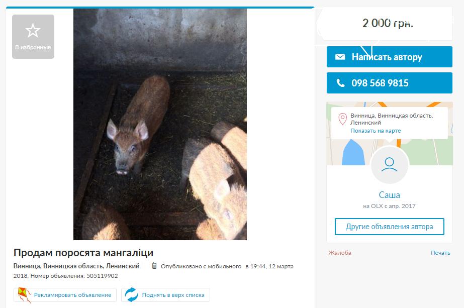«Не мала баба клопоту…»: поросята в Виннице и области, фото-4