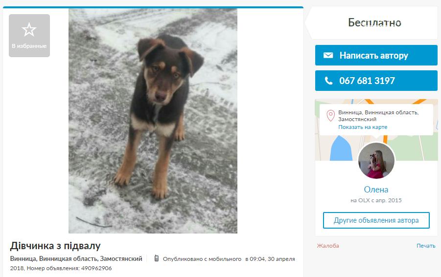 «Бесценные» друзья: собаки в хорошие руки в Виннице, фото-1
