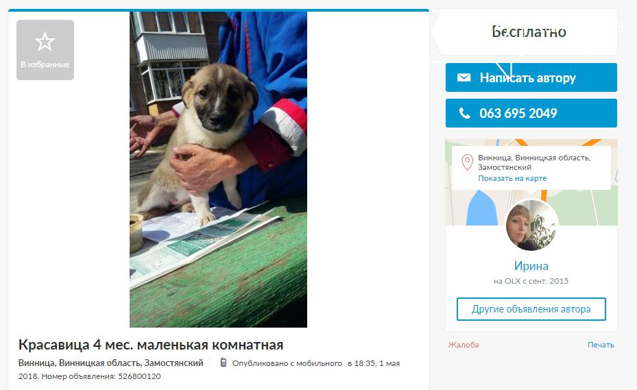 «Бесценные» друзья: собаки в хорошие руки в Виннице, фото-3