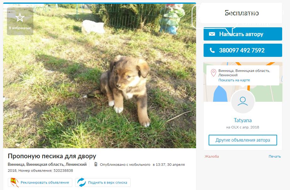 «Бесценные» друзья: собаки в хорошие руки в Виннице, фото-5