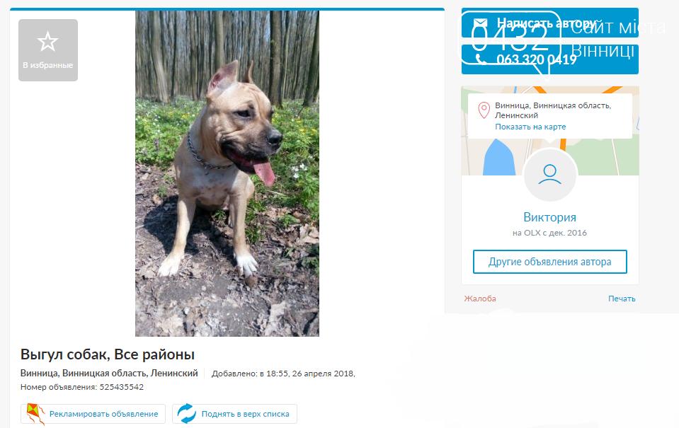 Когда хозяину некогда: специалисты по выгулу собак в Виннице, фото-1