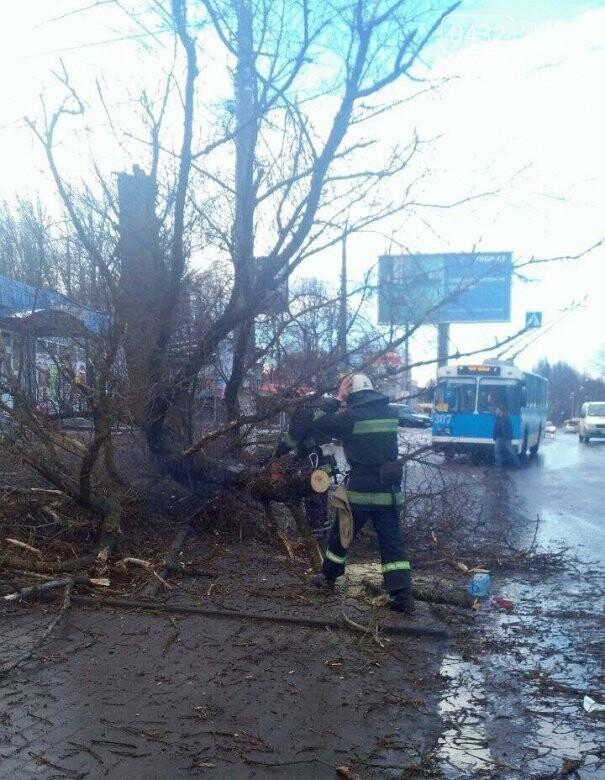 Трагедия в Виннице: дерево упало на 12-летнюю девочку (фото), фото-2