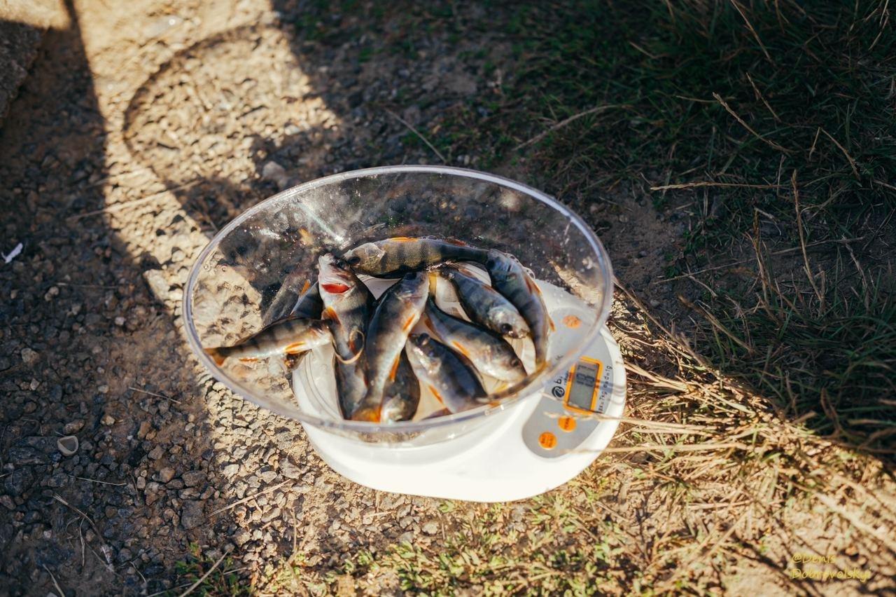 12 вересня «Вишенське озеро» приймало 2-й етап Вінницької Аматорської ліги з лову хижої риби з берега, фото-6