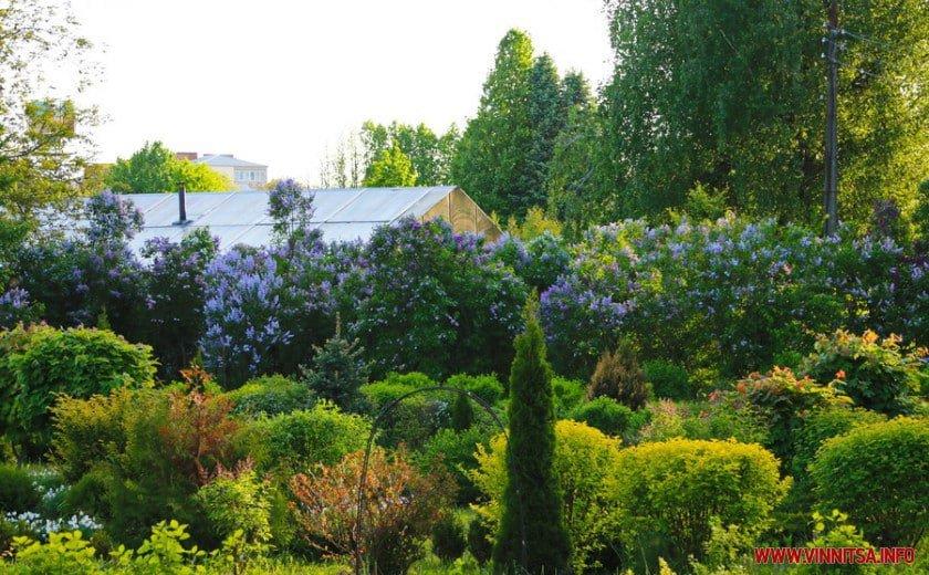 У Вінницькому ботанічному саду зацвів бузок, фото-5